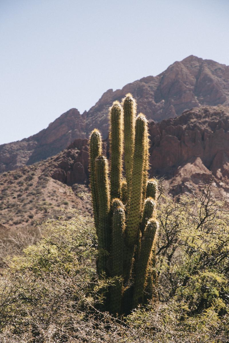 Cactus Tupiza Bolivie
