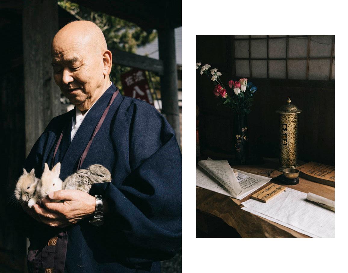 Les lapins du temple de Chokokuji sado island japon