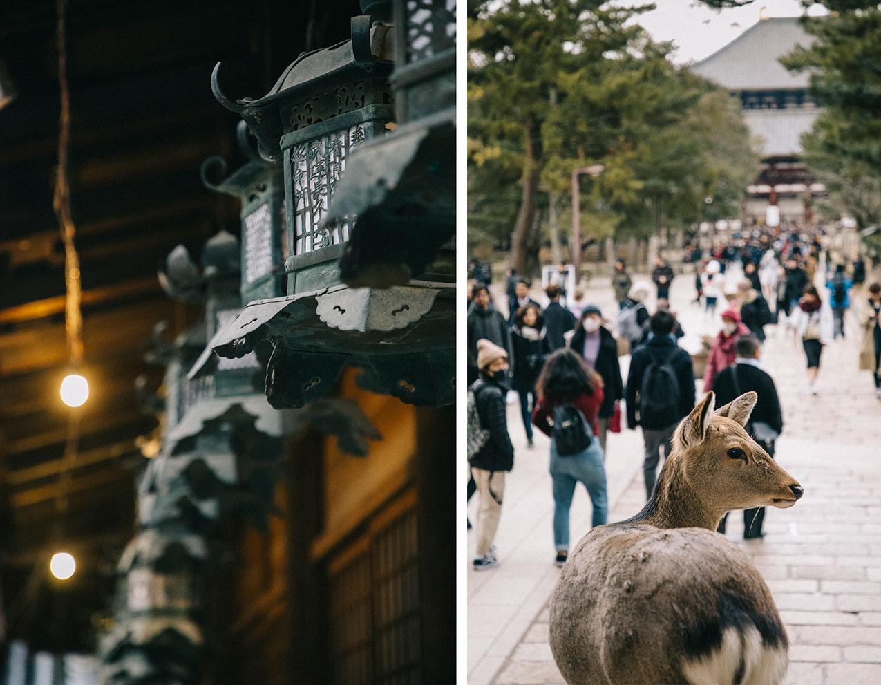 Nara temple daim Japon visite