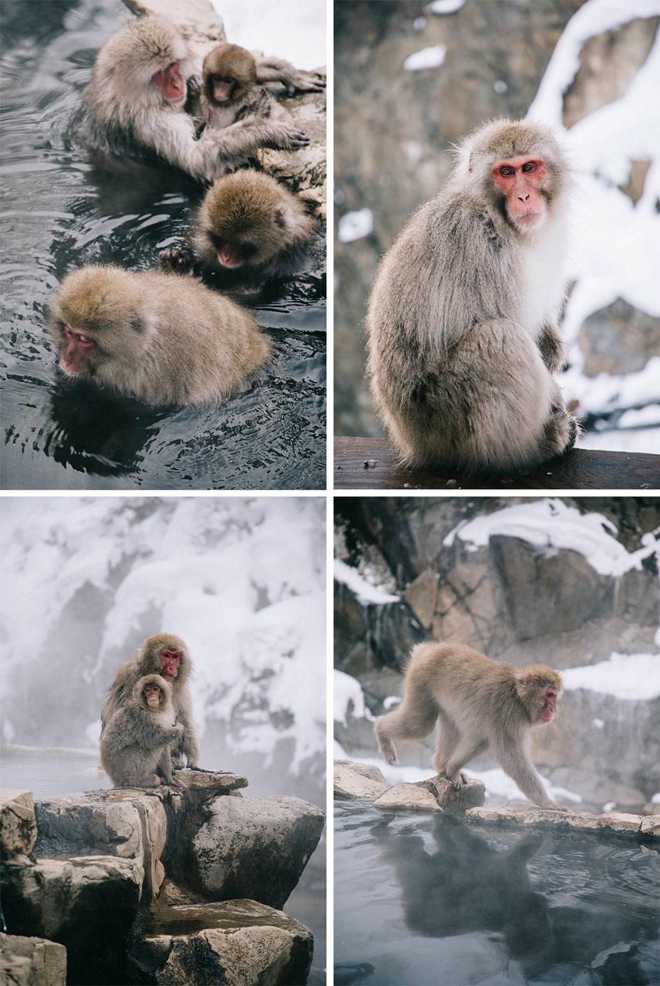 jigokudani snow monkey parc singe Japon onsen