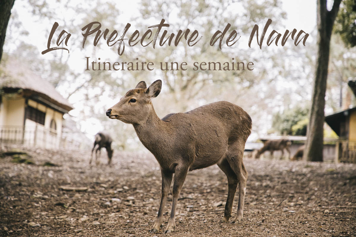 Nara prefecture japon visite itinéraire