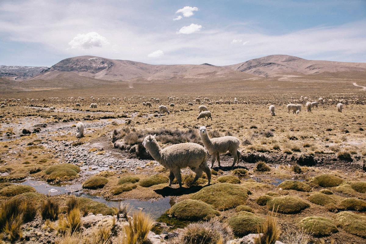 Pérou parc Natural Aguada Blanca