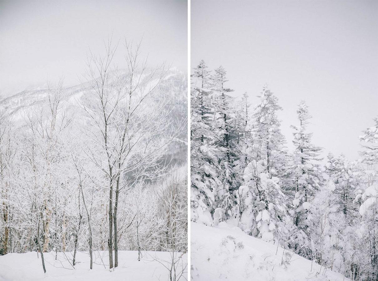 Shiga kogen nagano sapin blanc ski alpes japonaises