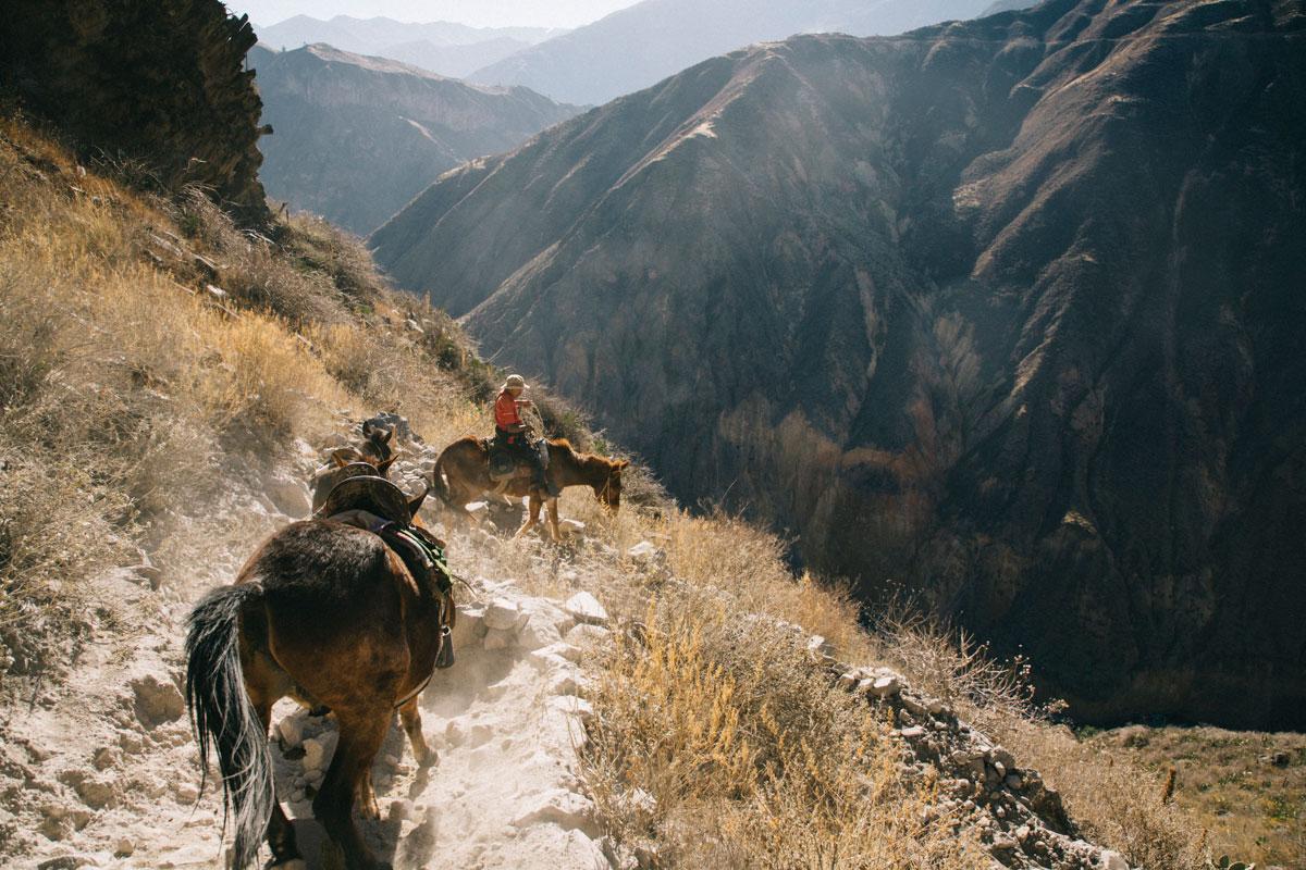 Chevaux dans le Canyon de Colla au Pérou