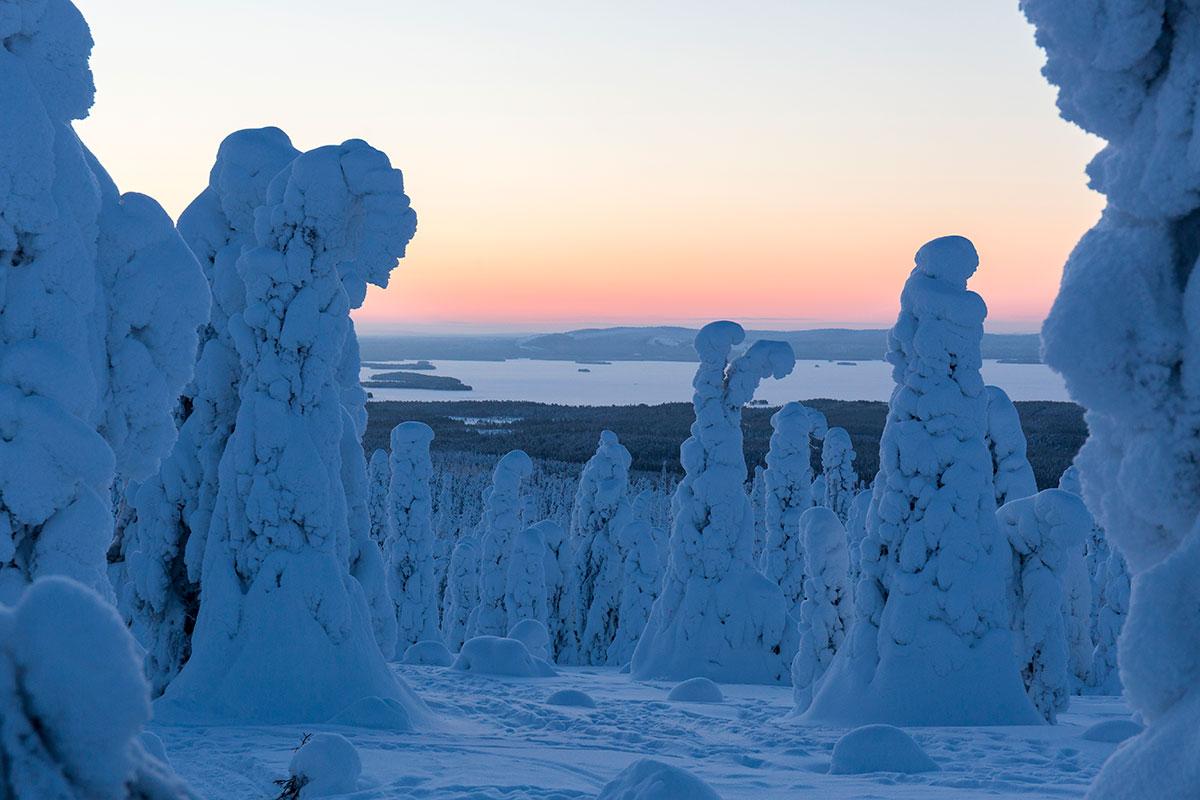 Paysage de la Laponie finlandaise en hiver