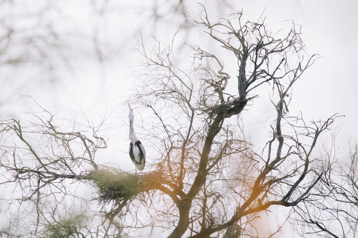 Un héron au parc ornithologique du Pont de Gau