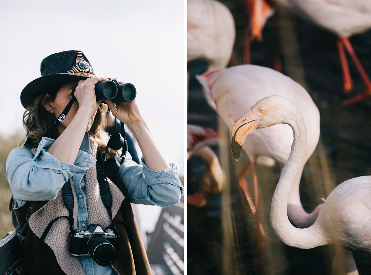 Observation des flamants rose au parc ornithologique du pont de Gau en camargue
