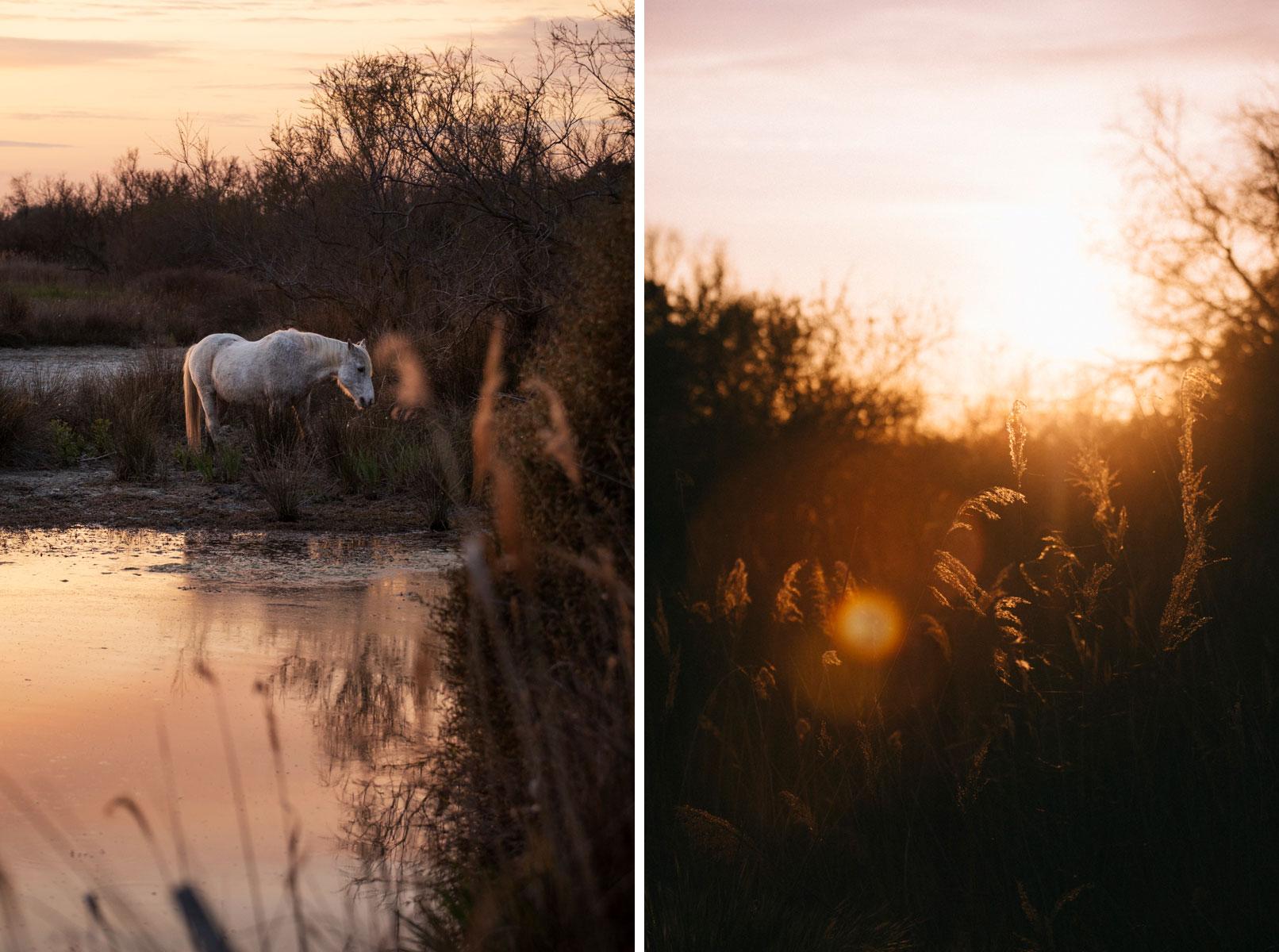 Coucher de soleil sur la Camargue avec un cheval