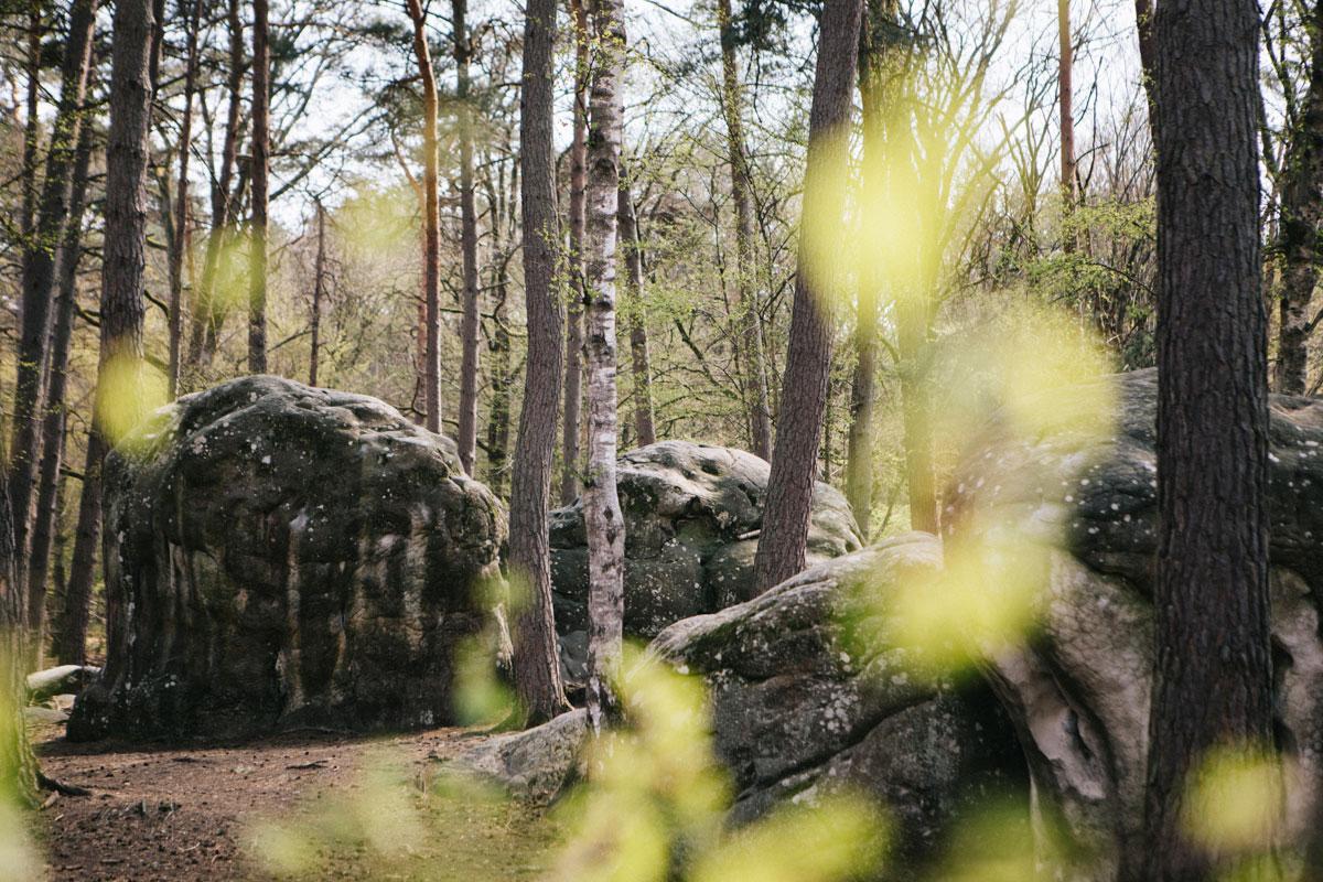 Paysage forêt de fontainebleau bloc de granit