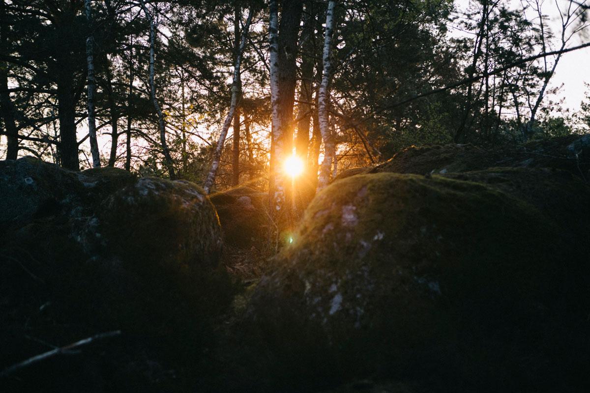 Lever de soleil à travers les blocs de granite foret de fontainebleau week-end randonnée