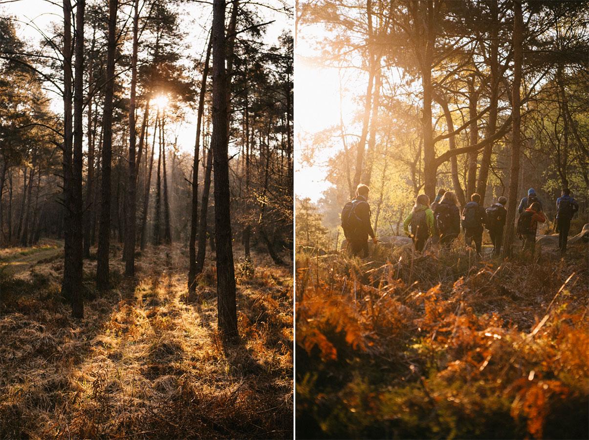 randonnée et lever de soleil dans la forêt de fontainebleau