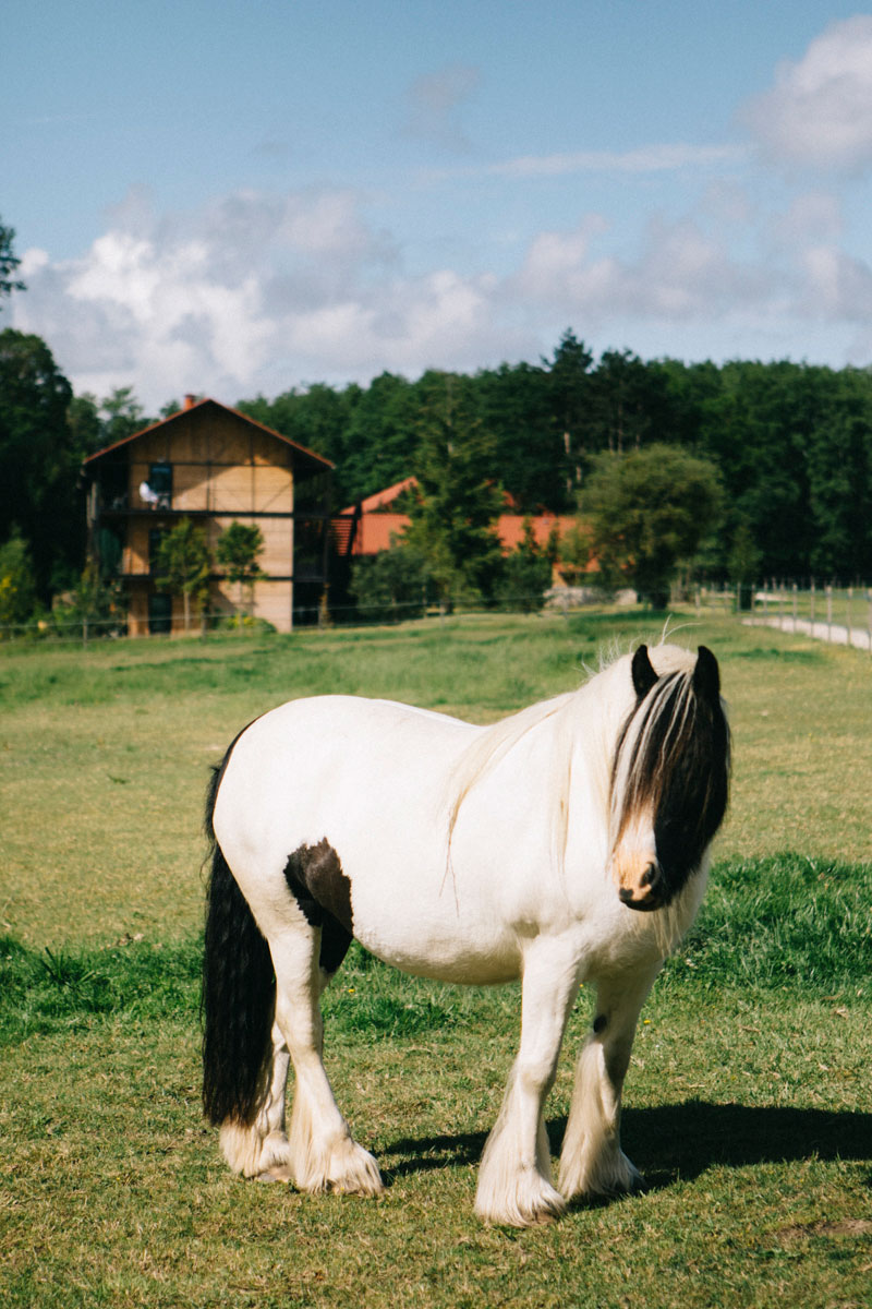 Cheval avec le barn