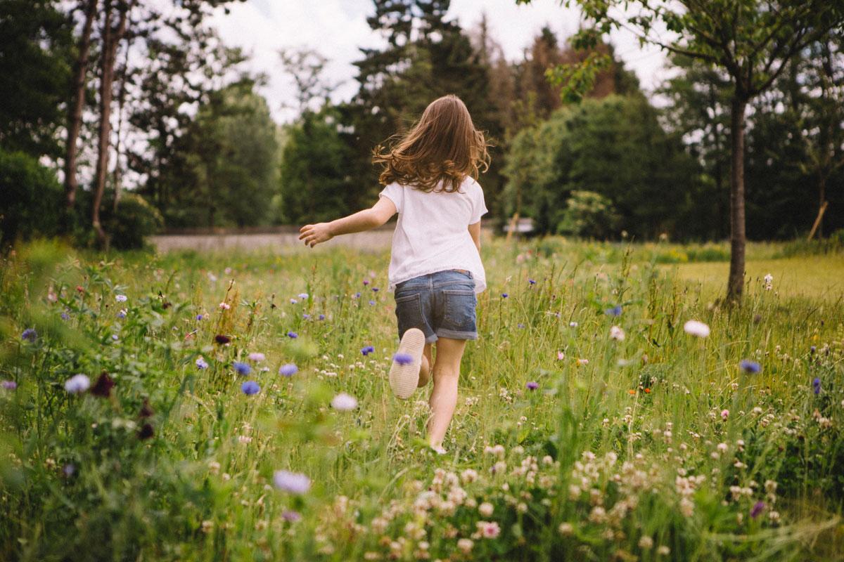 les fleurs sauvages dans le jardin , Barn hôtel, Rambouillet