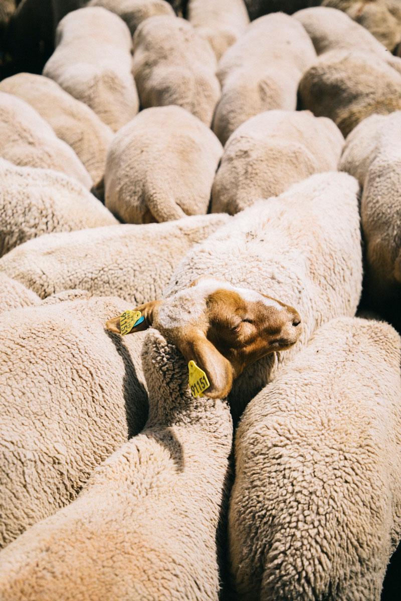 Mouton aux Ménuires randonnée