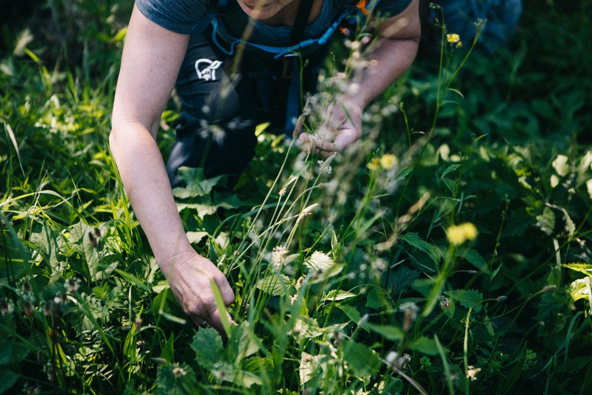 cueillette des plantes sauvages