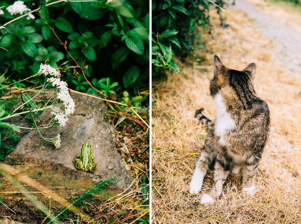Chat de grenouille dans le jardin d'Hélène