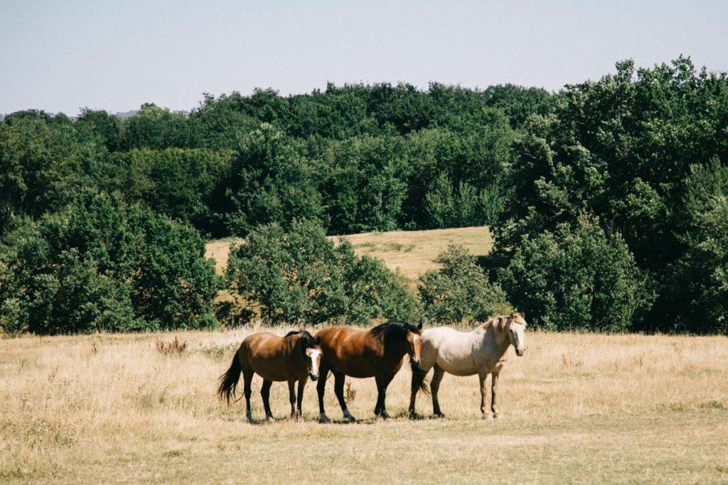 les chevaux dans la campagne gersoise