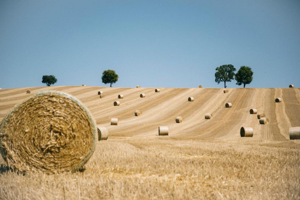 moisson des blé dans le Gers