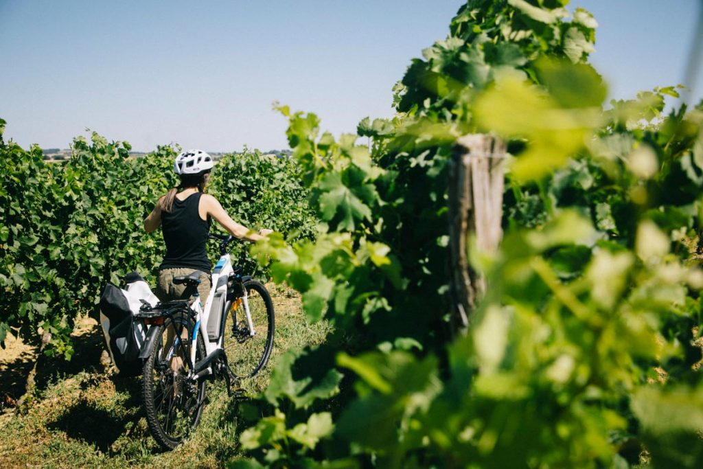 randonnée à vélo en passant par les vignes du Gers