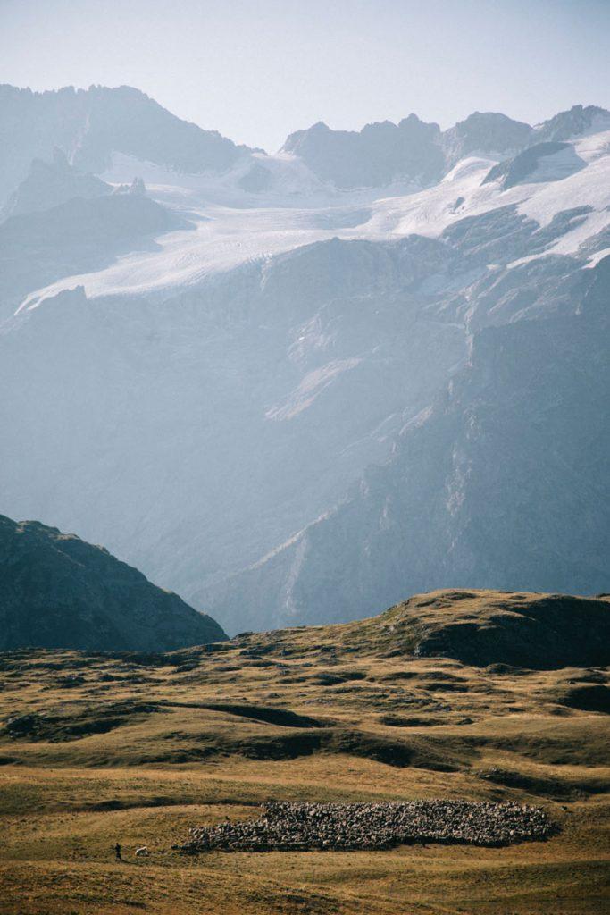 troupeaux de moutons et son berger au plateau d'Emparis
