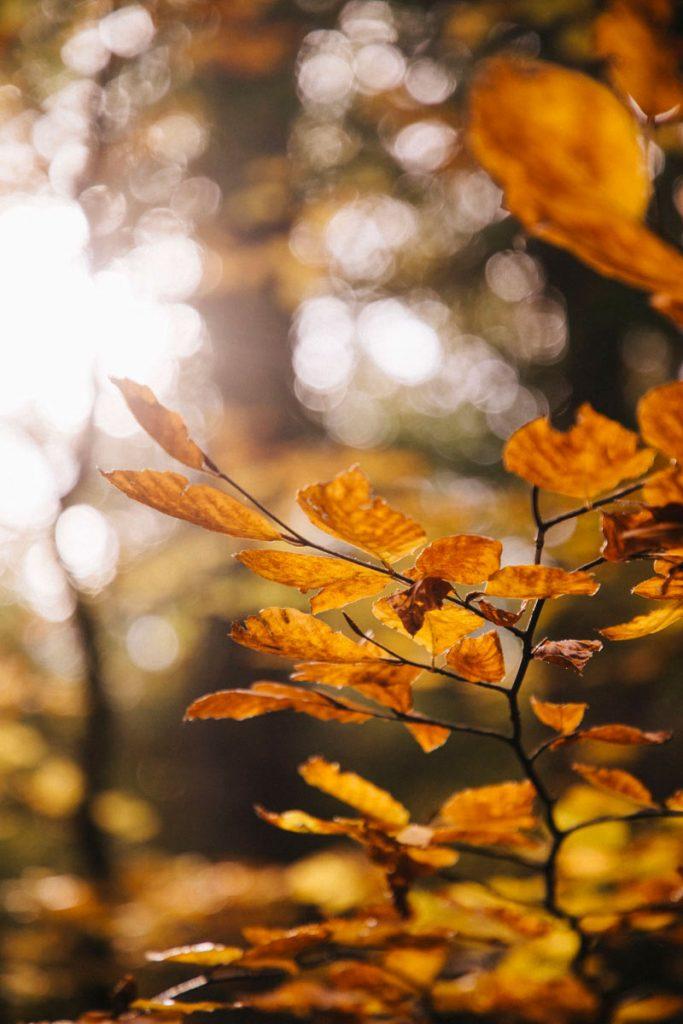 les couleurs d'automne autour des Houches