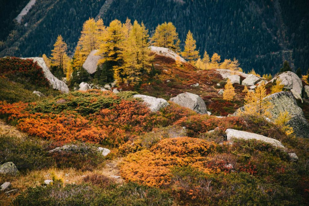 les couleurs d'automne à Chamonix en randonnée