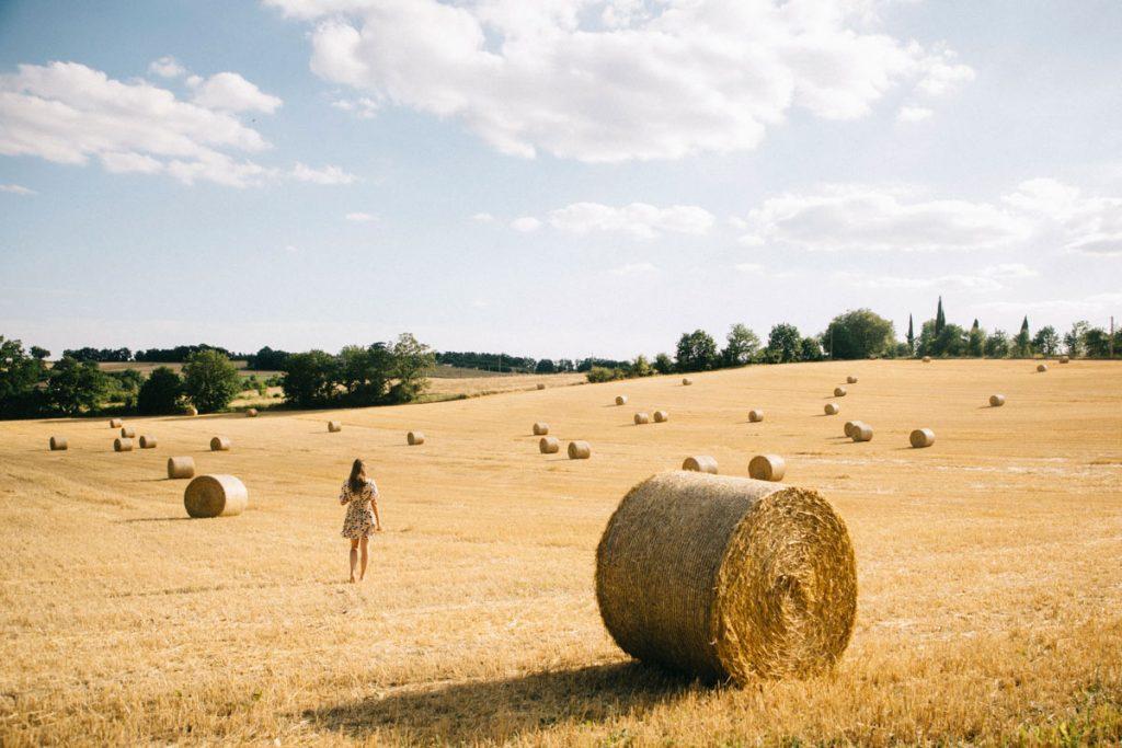 les champs de blé dans le tarn et Garonne