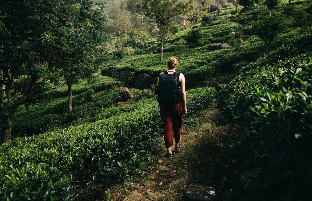 faire un trek dans les plantations de thé autour d'Haputale