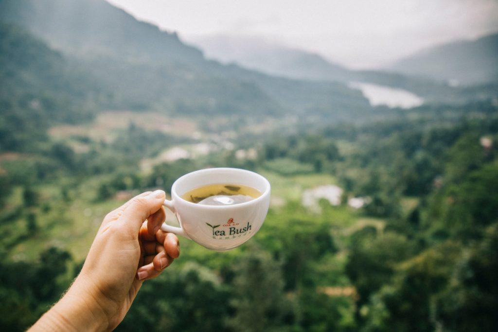 déguster différentes sortes de thés à Ramboda