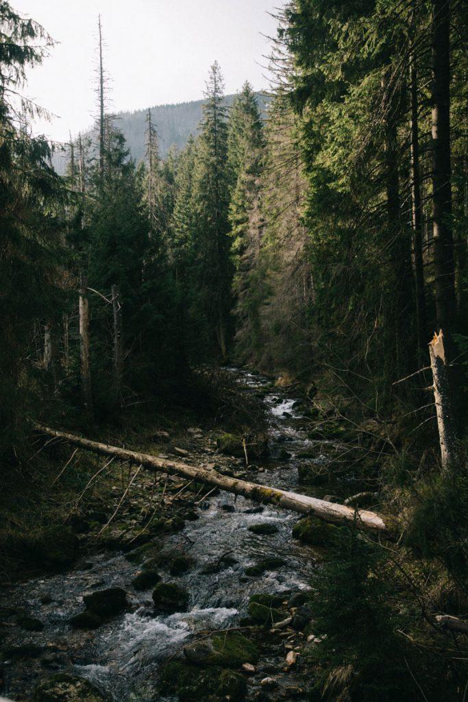 la forêt dense de la pologne dans la région des Tatras