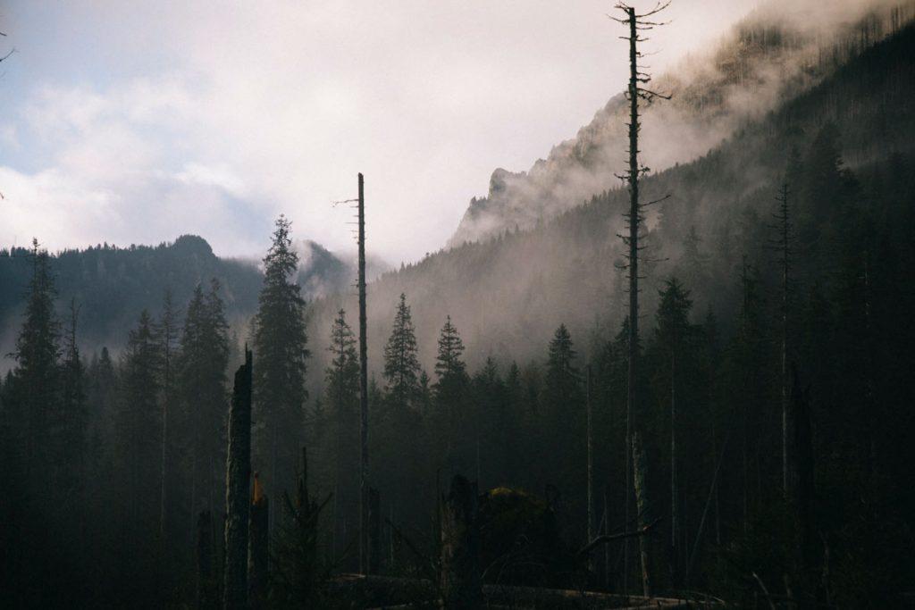 ambiance brumeuse au départ de la randonnée du lac de morskie Oko dans les Tatras
