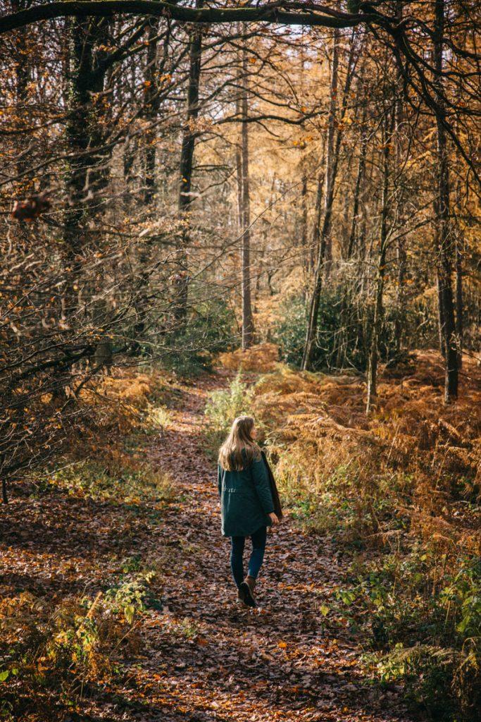 à la découverte des sentiers de randonnée dans le parc national d'Eilfel
