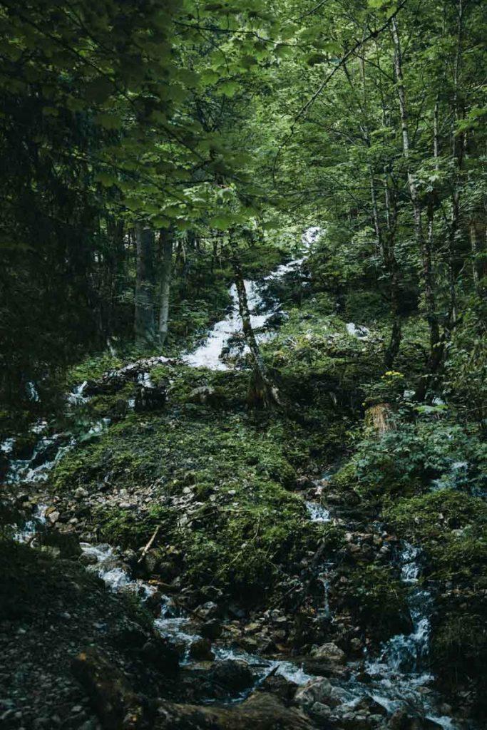 La nature de la Haute-Autriche pendant une randonnée au lac de Gosausee
