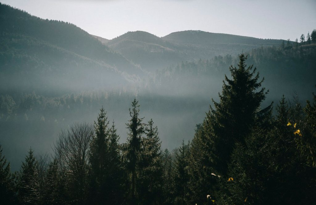 Paysage du massif des Vosges en Alsace