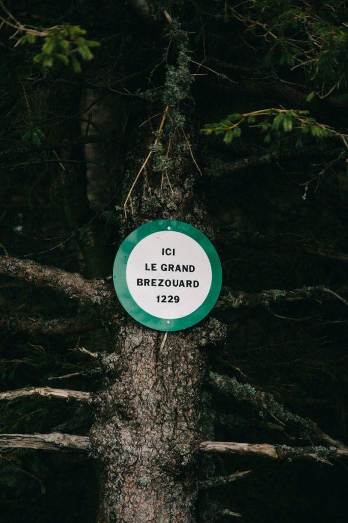 le sommet du grand Brézouard dans le massif des Vosges