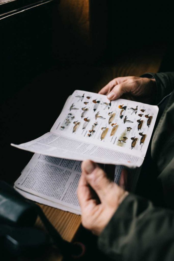 Découvertes et observation des espèces d'oiseaux dans le parc régional de la Brenne lors d'une visite guidée. crédit photo : Clara Ferrand - blog Wildroad