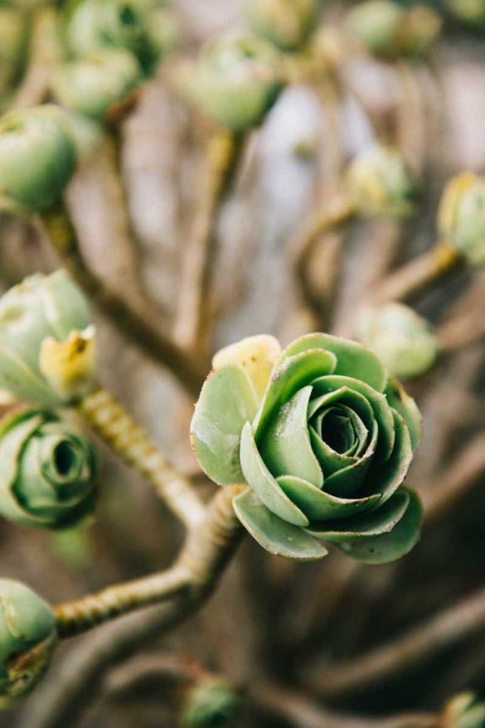 Les plantes dans le jardin d'acclimatation du Lazaret de Tatihou. crédit photo : Clara Ferrand -blog Wildroad