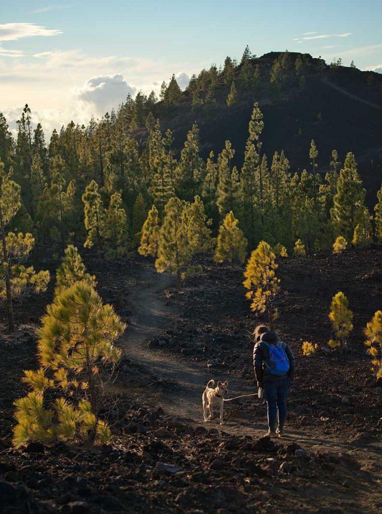 Le sentier de randonné pour accéder au sommet du volcan tiède à Ténérife. crédit photo : Novo Monde