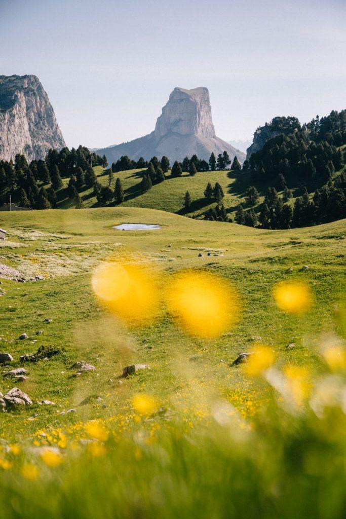 Le printemps avec les fleurs du pas d l'aiguille dans le parc naturel régional du Vercors. crédit photo : Clara Ferrand - blog Wildroad
