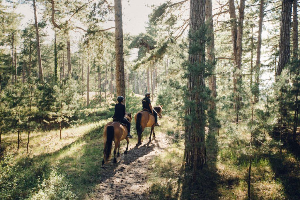 Balade à cheval dans le domaine du marqueterie avec le centre équestre Henson. crédit photo : Clara Ferrand - blog Wildroad