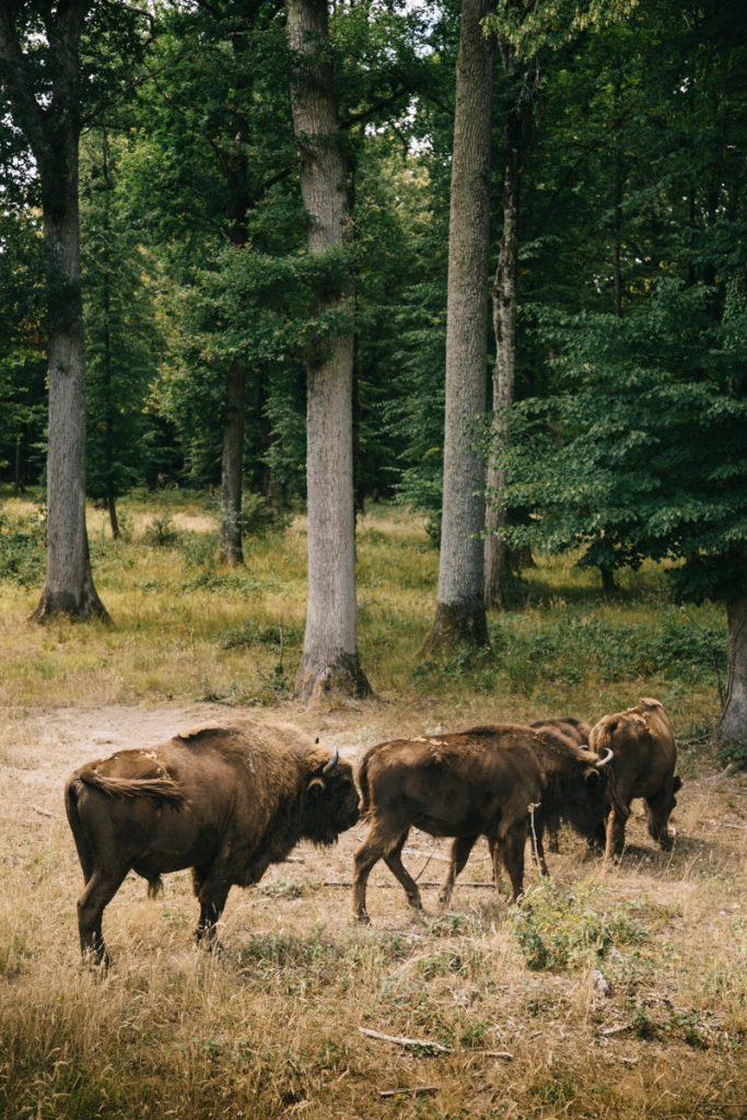 L'espace faune dans le parc naturel régional de la forêt d'Orient. crédit photo : Clara Ferrand - blog Wildroad