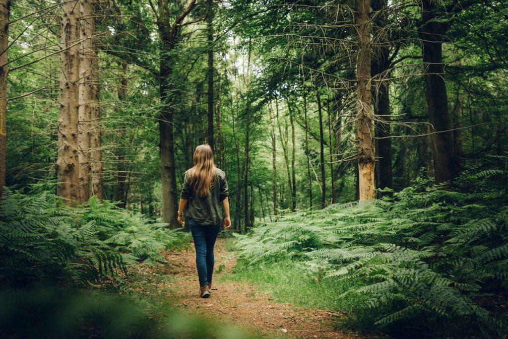 Randonné dans la forêt de Crécy dans la baie de Somme. crédit photo : Clara Ferrand - blog Wildroad