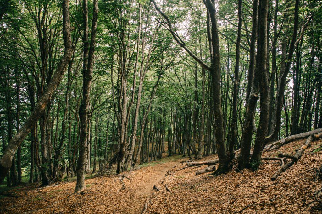 Le GR9 sur le sentier de la randonnée des 3 becs. crédit photo : Clara Ferrand - blog Wildroad