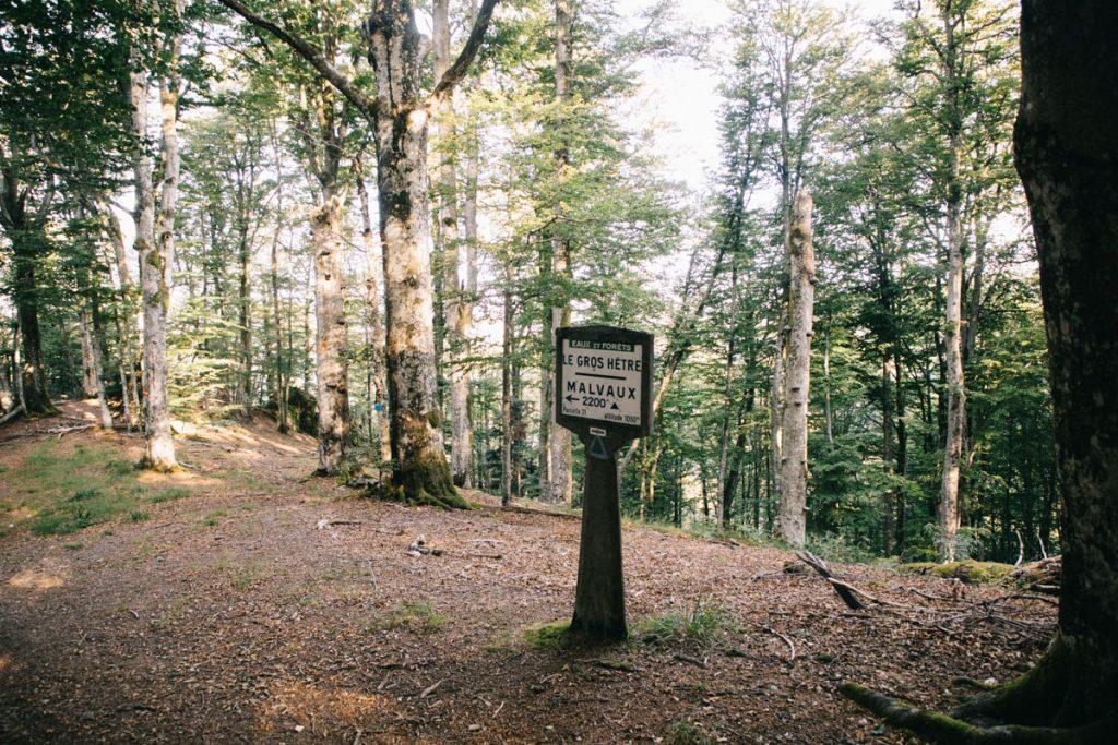 Le sentier de randonnée du Wissgurt à Giromany par le forêt du gros hêtre. crédit photo : Clara Ferrand - blog Wildroad