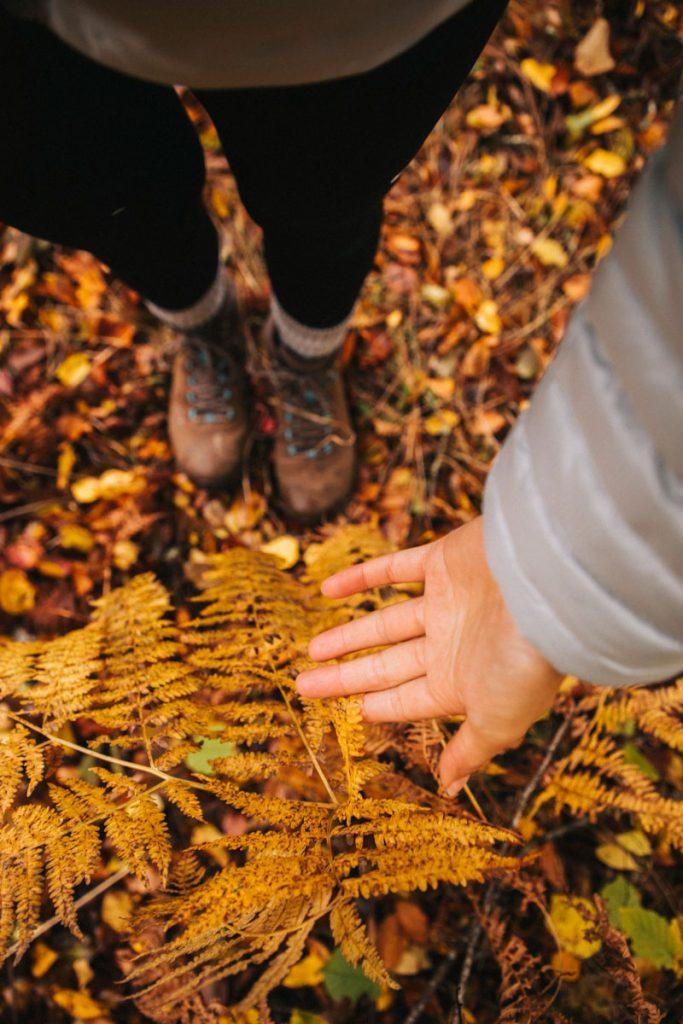 Les couleurs d'automne lors d'un week-end dans le Morvan. crédit photo : Clara Ferrand - blog Wildroad