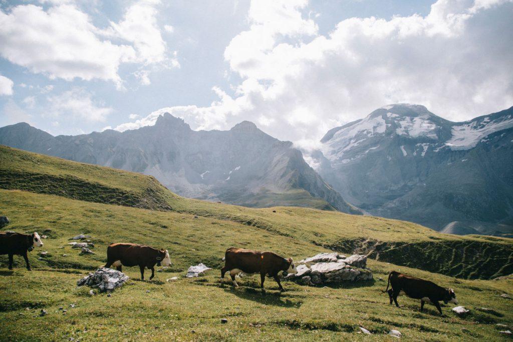 Les alpages en Savoie dans la Vanoise. crédit photo : Clara Ferrand - blog Wildroad