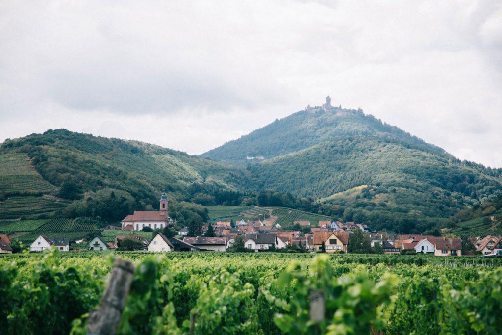 Le château de Haute Koenigsbourg depuis la piste cyclable. crédit photo : Clara Ferrand - blog Wildroad