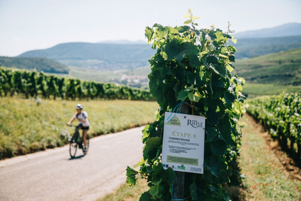 Balade à VTT électrique dans les vignobles alsaciens. crédit photo : Clara Ferrand - blog Wildroad