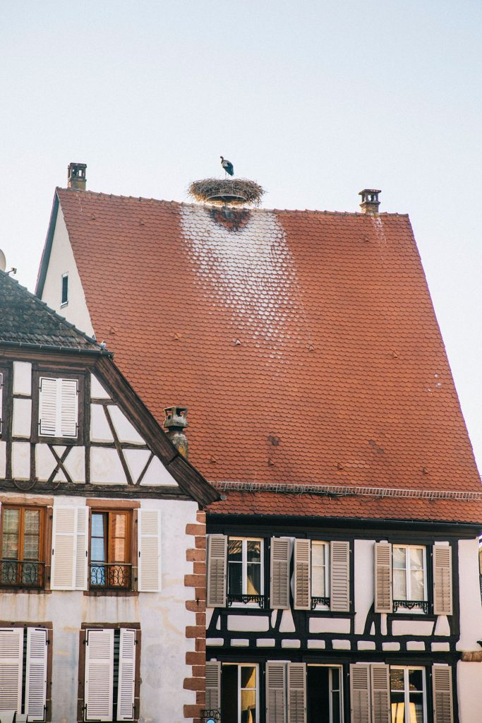 Le nid d'une cigogne en haut d'une maison à colombages à Ribeauvillé. crédit photo : Clara Ferrand - blog Wildroad