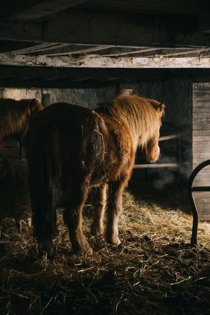 Les animaux de la ferme auberge du Steinlebach dans le massif des Vosges. crédit photo : Clara Ferrand - blog Wildroad